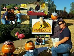 Pumpkin Patches Near Chico California by Nvadg Hashtag On Twitter
