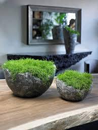plante de bureau plante pour bureau nouveau plantes de bureau plantes d