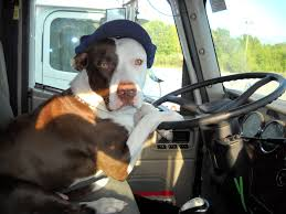 Love Like A Dog: Truckin'.... Dog Truck Stock Photos Royalty Free Images Takes Semitruck For Joyride Crashes Into Tree And Parked Car Houston Food Foodie Good Hot Crate For Pickup How To Transport Dogs Safely In Quad Eastern Plant Hire Funloving Monster Truck Dog By Destroyer77 On Deviantart Stolen Reunited With Owner Days After It Was Taken The Back Of A Pickup Australia Photo 472518 Filetip Quad Trailerjpg Wikimedia Commons Home