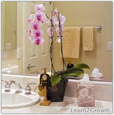 Plants In Bathroom Feng Shui by Plants For A Luxurious Bathroom U2013 Raven Tao Big City Small Apartment