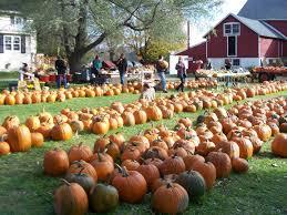 Toms Pumpkin Farm by Ozaukee Pumpkin Farm Corn Maze U0026 Apple Orchards Ozaukee Magazine
