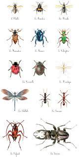 petites betes dans la maison insectes maison a insectes insectes école et