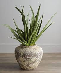 Good Plants For Bathroom by 5 Best Plants For Green Bathroom Quiet Corner