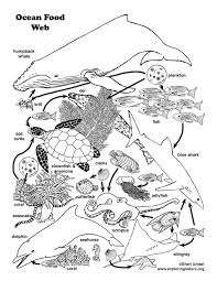 Ocean Food Web Coloring Page