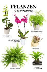 geeignete pflanzen fürs badezimmer in 2021 pflanzen