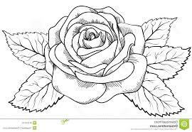 Rose Flower Drawing Step Step at GetDrawings