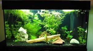 conseils pour un premier aquarium betta splendens