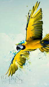 Parrot Bodies Hit The Floor Remix by Anime Wallpaper Google Search Desktop Wallpaper