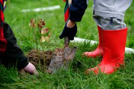 Christmas Tree Saplings For Sale Ireland by Tree U2013planting Blitz U2026 Northern Ireland Environment Link