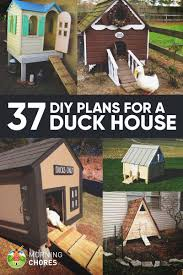 37 Free DIY Duck House / Coop Plans & Ideas That You Can Easily ... 6 Easy Tips For Duck Brooding Success Community Chickens For Making Maximum Profits From Duck Farming Business You Have To Types Of Ducks Eggs Meat And Pest Control Countryside Network Best Breeds Pets Egg Production Hgtv Your Winter Coop Keeping In Cold Weather Coop 12 Things You Should Know About Raising Ducks Or Chickens Ten Reasons Choose 132 Best Images On Pinterest Backyard What Eat And How To Care Them