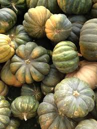 Kent Ohio Pumpkin Patches by 260 Best Fall Photos Images On Pinterest Fall Photos Gourds And