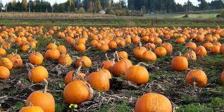 Boyd Tx Pumpkin Patch by 2017 September U2013 Valley Business Hub