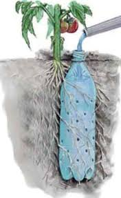 Tomato Plants Like Deep Watering Why Waste Water When You Can Make A Simple Reservoir Delivery System Neat Idea The Photo Says It All