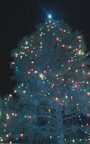 What Is The Best Christmas Tree by Two Graces Taos December 2010