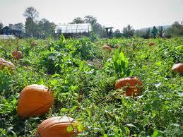 Spring Hope Pumpkin Festival Schedule by Harvest Festival October