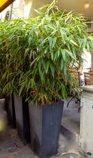bambous ch boutique du bambou en ligne bambous