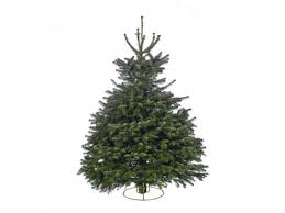 Nordmann Fir Christmas Trees Wholesale by 13 Best Real Christmas Trees The Independent