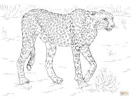 Click The Cheetah Coloring Pages