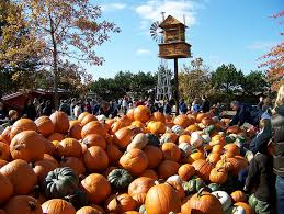 South Reno Pumpkin Patch by Local Illinois Pick Your Own Pumpkin Patches
