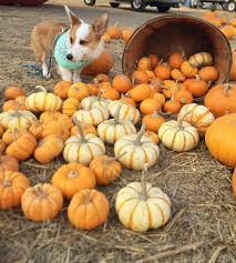 Half Moon Bay Pumpkin Patches 2015 by Photos Abc7 News Viewers Get Spooky For Halloween 2015 Abc7news Com