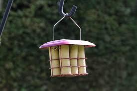 Suet Logs for Birds