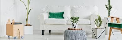 kakteen und weißes sofa im modernen wohnzimmer