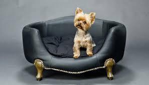comment nettoyer l urine de votre chien sur votre canapé
