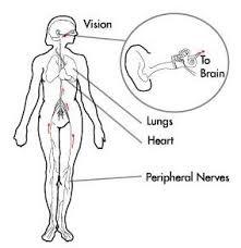 Lightheadedness When Standing by Dizziness Symptoms Causes Diagnosis Dizziness Treatment