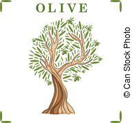 Illustration of olive tree Vector
