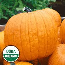 Connecticut Field Pumpkin For Pies by Organic Vegetables Organic Pumpkin Seeds