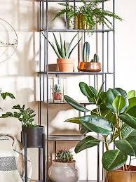 wohnzimmer pflanzen westwing