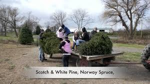 Christmas Tree Seedlings Wholesale by Mayne U0027s Tree Farm Christmas Trees Mov Youtube