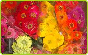 Austin Flower Co