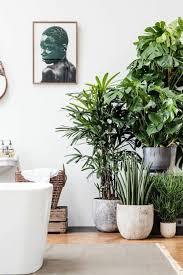 12 unglaublich galerie pflanzen wohnzimmer modern