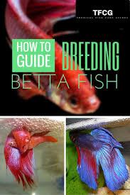 African Dwarf Frog Shedding Or Sick by 349 Best Aquarium Images On Pinterest Aquarium Ideas Fish Tanks