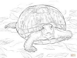 Turtles Coloring Pages For Realistic