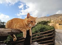 cat on cat on a fence in preveli