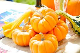 Pumpkin Patch Naples Fl by Florida Fall Festivals U0026 Activities
