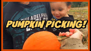 Pumpkin Picking In Ct by Pumpkin Picking In Jersey Weekly Vlog Youtube
