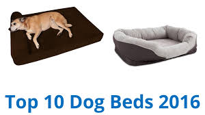 Top Rated Orthopedic Dog Beds by 10 Best Dog Beds 2016 Youtube