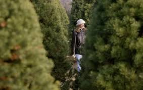 Christmas Tree Shop Waterford Ct by Best Places To Cut Your Own Christmas Tree In Metro Detroit Cbs