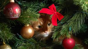 Simons Cat Christmas Tree by How To Avoid A Christmas Tree Cat Astrophe This Festive Season