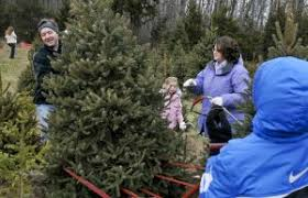 Elgin Il Christmas Tree Farm by Fox Valley Il Christmas Tree Farms U0026 Stands The Rullo Team Real