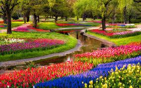 Colorful Garden Flowers hd free wallpapers HD Wallpaper