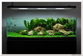 Planted Tank Disky Delight by Abdul Mufti Aquascape Awards