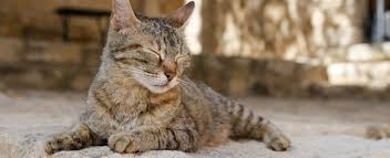 renal failure in cats 11 things to about cats with kidney failure petplace