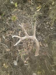 42 best shed hunting images on pinterest sheds deer hunting and
