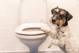 warum folgt mein hund mir auf die toilette zooplus