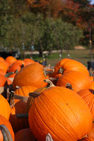Pattersons Pumpkin Patch Gig Harbor by 8 Best Depositions Images On Pinterest Php A Photo And Court