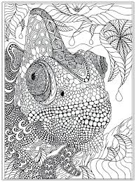 Fresh Printable Coloring Pages Adults For Download Owl Pdf Free Pinterest Sheets Full Size